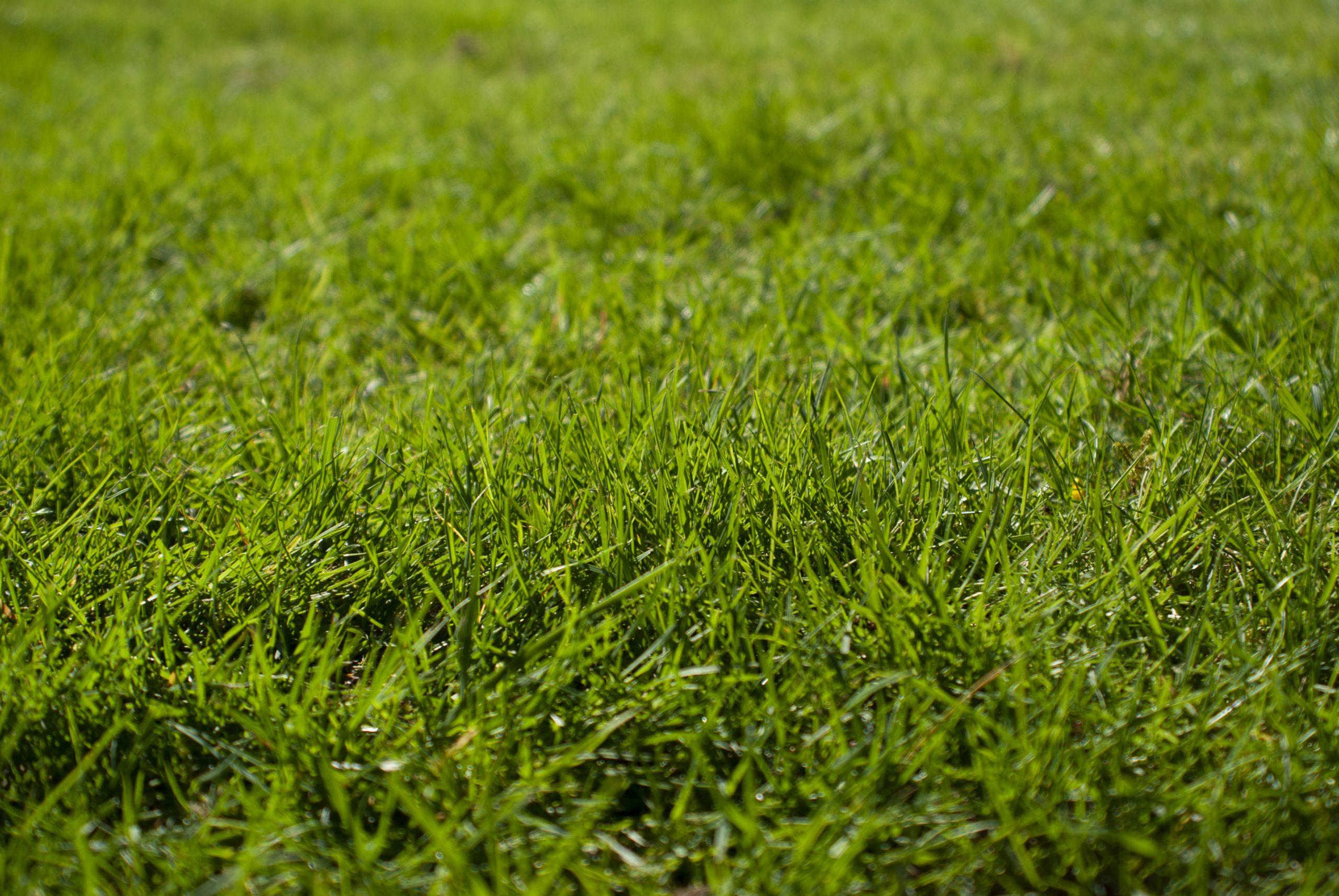 Pielęgnacja trawnika wiosną. O co warto zadbać?