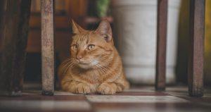 Jak zapobiec drapaniu mebli przez kota?