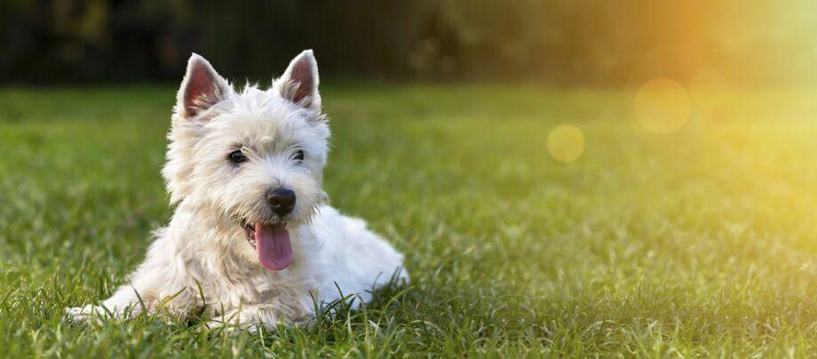 Ogród, pies i buda