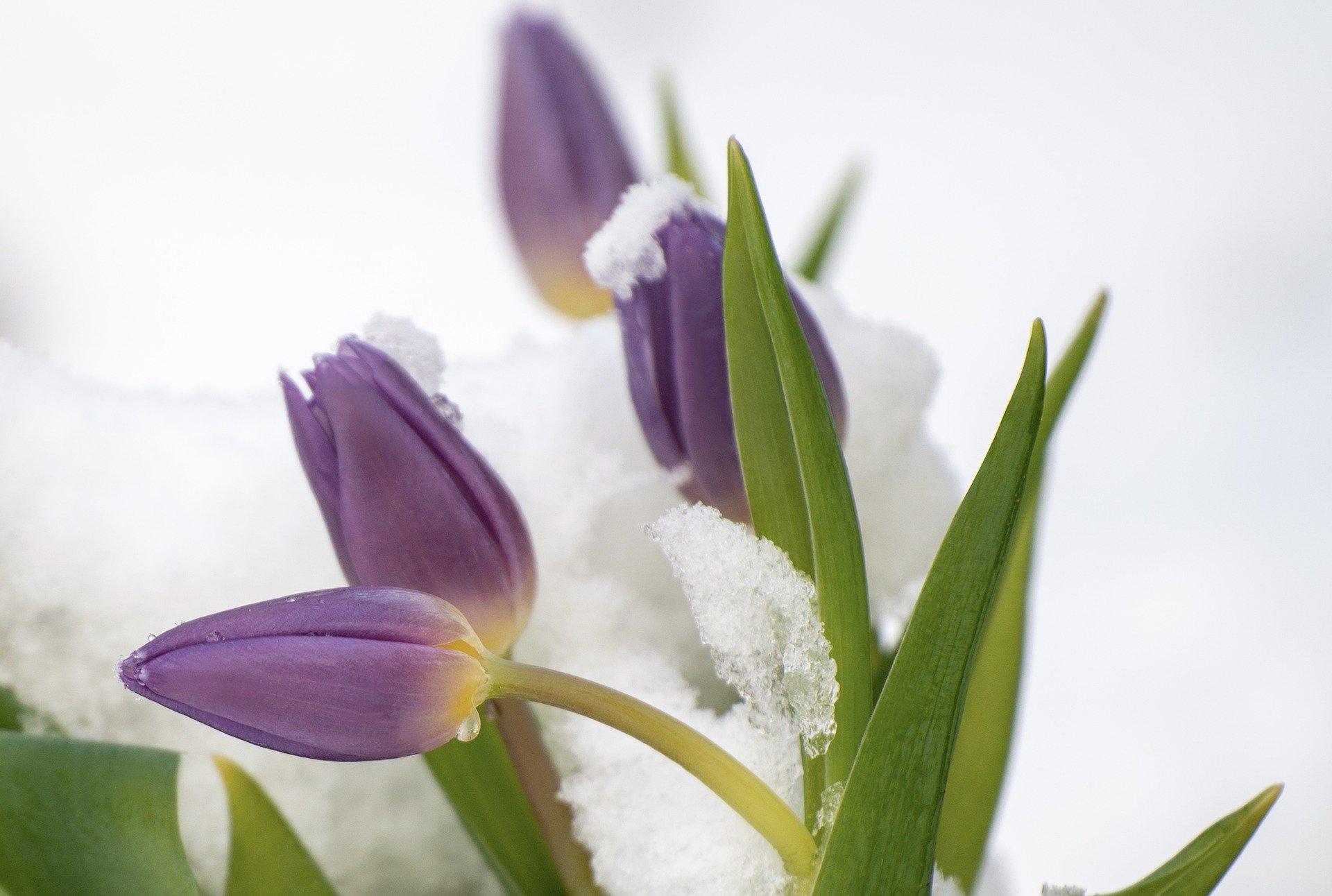 Aranżacja ogrodu, planowanie, przygotowanie na wiosnę, czyli prace ogrodowe na całego